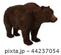 グリズリー くま クマのイラスト 44237054