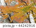 紅葉 秋 自然の写真 44242916