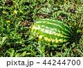 すいか スイカ 西瓜の写真 44244700