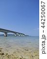 古宇利大橋 夏 古宇利島の写真 44250067