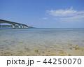 古宇利大橋 夏 古宇利島の写真 44250070