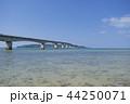 古宇利大橋 夏 古宇利島の写真 44250071