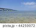 古宇利大橋 夏 古宇利島の写真 44250072