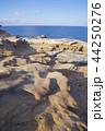 千畳敷 景勝海岸 海の写真 44250276