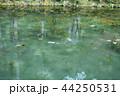 岐阜のモネの池 44250531