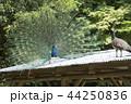 大牟田市動物園 クジャク、 44250836