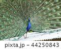 大牟田市動物園 クジャク、 44250843