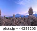 風景 富士山 世界遺産の写真 44256203