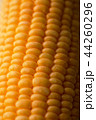Close up shot Fresh ripe and peeled sweet corn 44260296