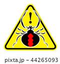 セアカゴケグモのイラスト 44265093