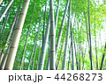 竹林 竹 嵐山 44268273