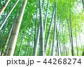竹林 竹 嵐山 44268274