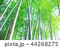 竹林 竹 嵐山 44268275