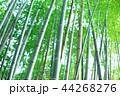 竹林 竹 嵐山 44268276