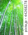 竹林 竹 嵐山 44268278