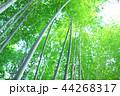 竹林 竹 嵐山 44268317