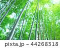 竹林 竹 嵐山 44268318