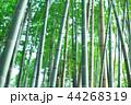 竹林 竹 嵐山 44268319