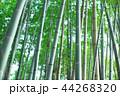 竹林 竹 嵐山 44268320