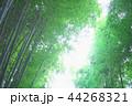 竹林 竹 嵐山 44268321