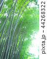 竹林 竹 嵐山 44268322