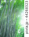 竹林 竹 嵐山 44268323