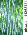竹林 竹 嵐山 44268324
