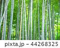 竹林 竹 嵐山 44268325
