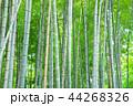 竹林 竹 嵐山 44268326