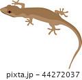 Brown Gecko Reptile Animal 44272037