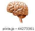 脳 44273361