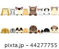 猫たちのボーダーセット 見上げる 見下ろす 44277755