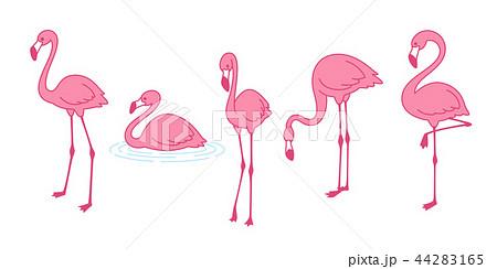 Cartoon pink flamingo vector set icon Cute bird 44283165