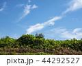 雲 空 青空の写真 44292527