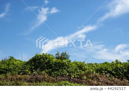 青空 雲 44292527