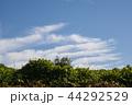 雲 空 青空の写真 44292529