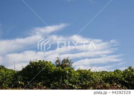 青空 雲 44292529