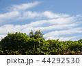 雲 空 青空の写真 44292530