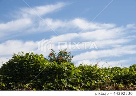 青空 雲 44292530