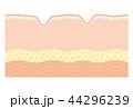 皮膚の断面図 シワ 44296239