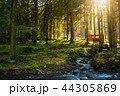 sunny coniferous forest in autumn evening 44305869