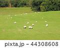 スコットランドの羊牧場 44308608