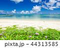 夏のビーチ 44313585