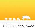 イノシシ 44315888