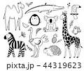 サファリ かわいい ぺんぎんのイラスト 44319623
