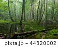 森林 林 森の写真 44320002