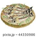 鰰 はたはた 魚のイラスト 44330986
