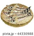 鰰 はたはた 魚のイラスト 44330988