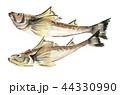 鰰 はたはた 魚のイラスト 44330990