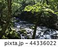 夏 川 阿蘇国立公園の写真 44336022